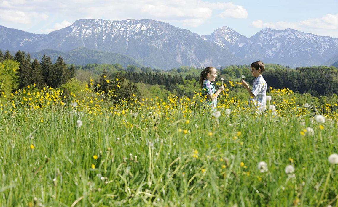 Www Chiemsee Bauernhofurlaub De 10