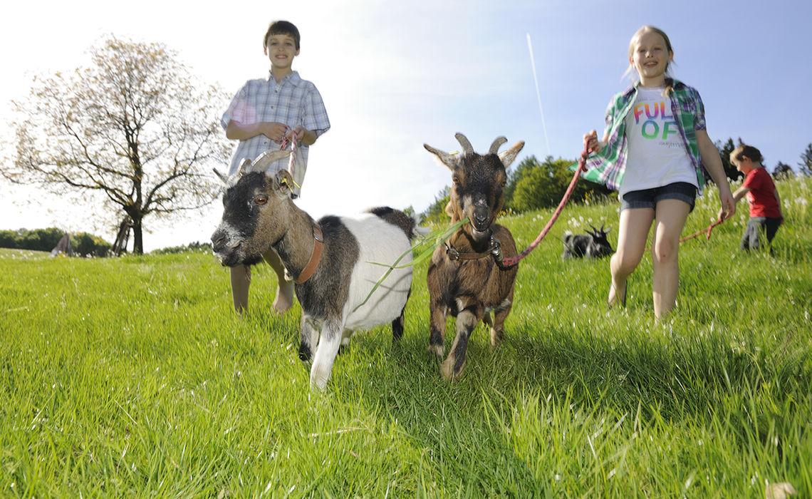 Www Chiemsee Bauernhofurlaub De 11