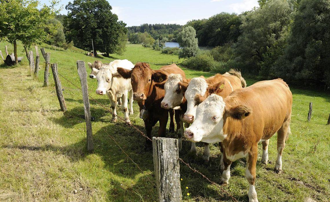 Www Chiemsee Bauernhofurlaub De 17