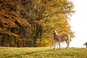 Reiterferien am Bauernhof im Chiemgau