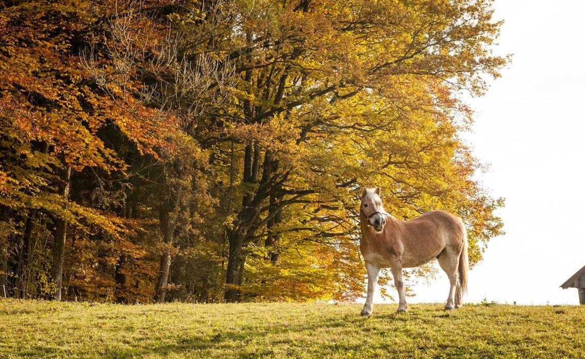Www Chiemsee Bauernhofurlaub De 19 1